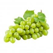 Sauvignon Blanc (7)